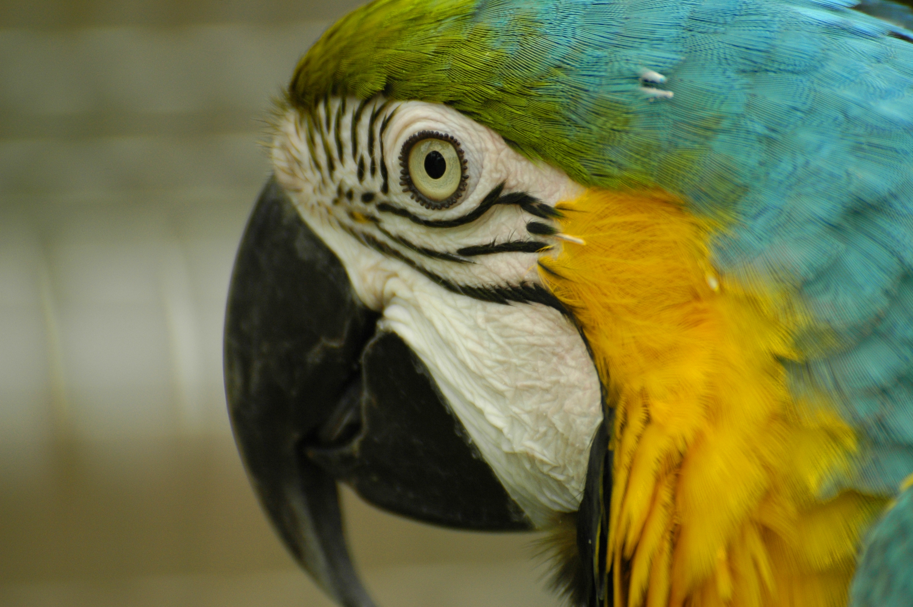 photo of a macaw