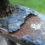 Kirkstall Abbey Rust