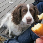 Lily doughnut