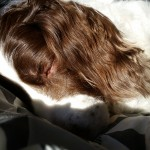 Lily sleeping in sunlight